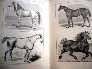 Facts for Horse Owners: A Pictorial Encyclopedia of Practical Instruction, Embracing the Education, Management, and Care of Horses, etc. etc.
