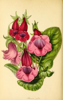 Paxton's Magazine of Botany,and Register of Flowering Plants.